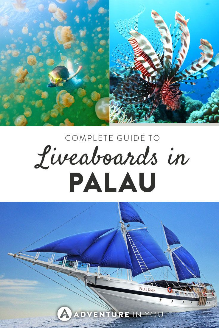 Diving in Palau | Complete Guide to Palau Liveaboards. From comparing boats to choosing the best dive sites #palau #diving