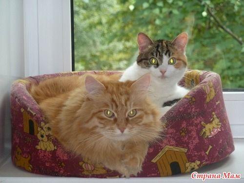 А может вдвоём веселее - Любители кошек. - Страна Мам