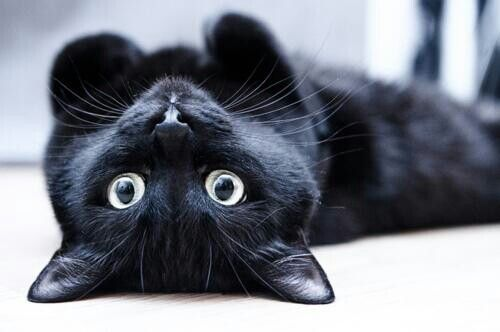 #black #cat #adorable #pet #sweet #eyes