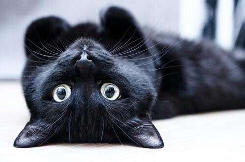 #black #cat #adorable #pet #sweet #eyes