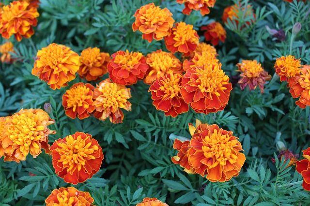 35 best plantas de exterior images on pinterest outdoor - Planta exterior resistente ...