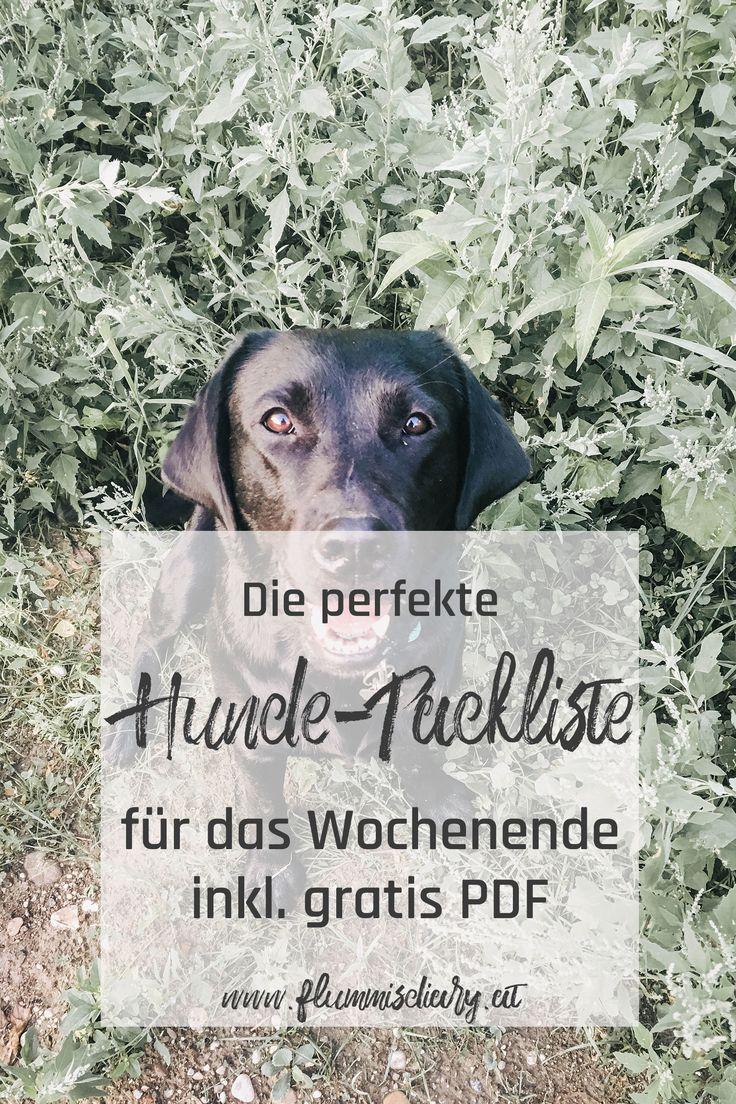 Ausflug Mit Hund Packliste Inkl Gratis Pdf Packliste Zum Download Hunde Urlaub Mit Hund Ausflug