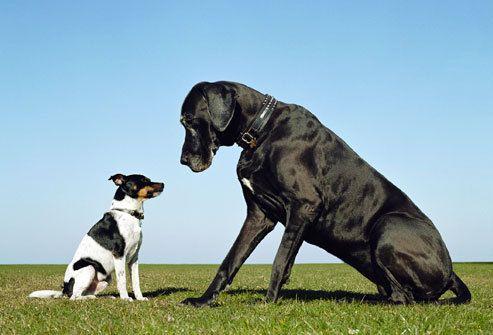Barátság kiskutya és nagykutya között - Minden szoktatás kérdése  #kutya #dog  #blackdog #cute #funny #kutyabarathelyek #kutyabaráthelyek