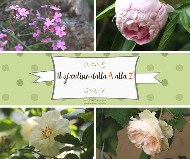1379 best un giardino in diretta images on pinterest for Fiori dalla a alla z