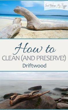 c7a1dcda0fd6a36d89431bc83685c17f How to Clean Driftwood, How to Preserve Driftwood, Driftwood, Things to Do With ...