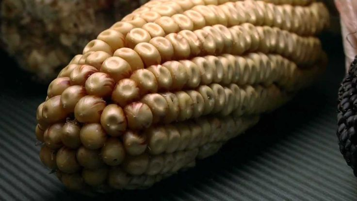 History of maize cultivation