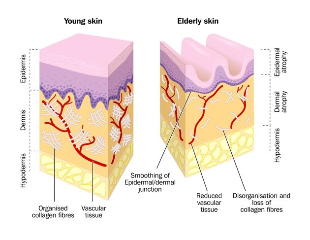 What is Collagen? - Collagen Lift Paris
