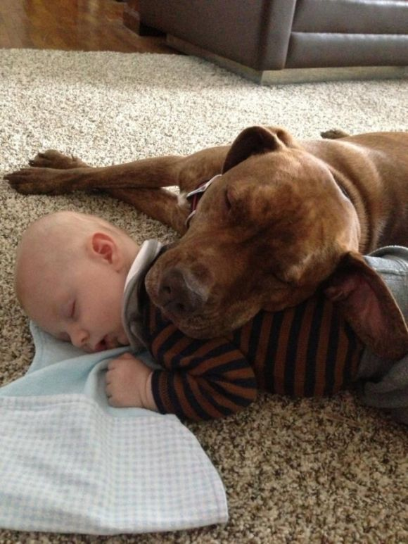 30 Cute Pictures Of Children And Animals | Cutest Paw