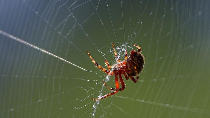 Leur toile en parachute, des millions d'araignées sont tombées du ciel en Australie