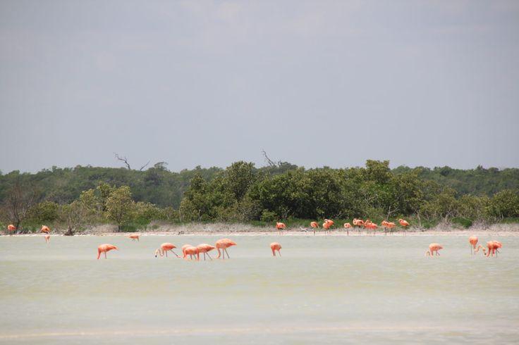 Rundreise Yucatan - Rio Lagartos Flamingos