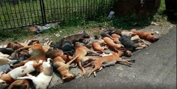 petitie: INTERNATIONAL SUPPORT to STOP PUBLIC SLAUGHTERING of STRAY DOGS in KERALA, INDIA