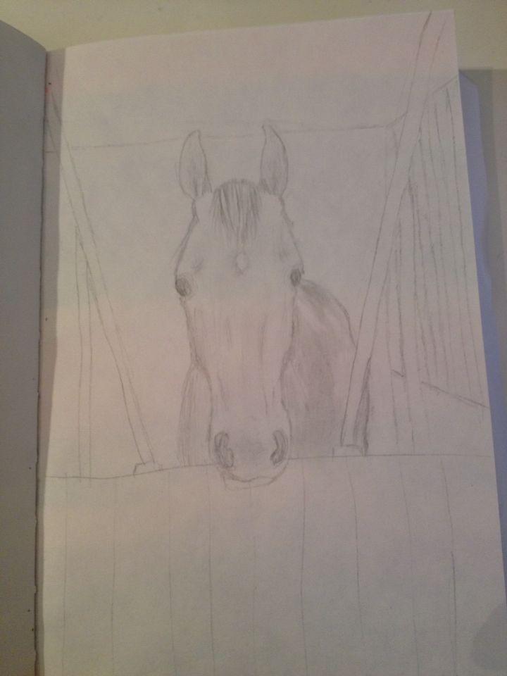 Een paard van de manege waar ik rij