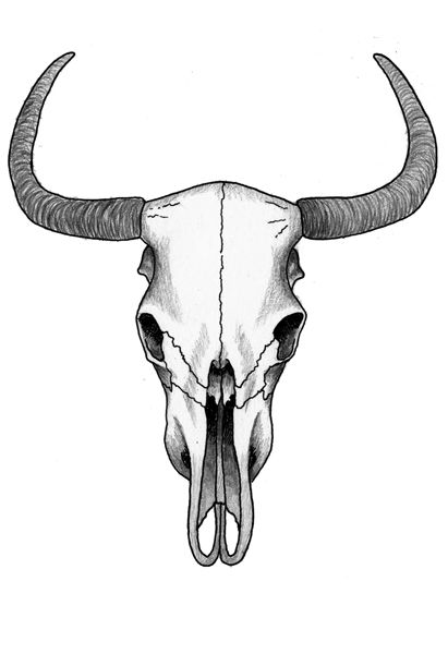 cow skull pencil drawing - Google Search