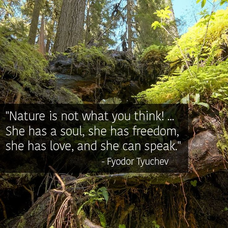 1000+ Mother Nature Quotes On Pinterest