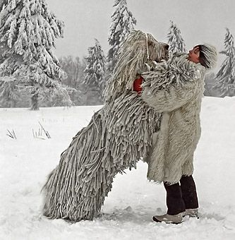 The Komondor, an old and large Hungarian breed of dog, know for it's dignity, bravery and strength.   ...And it's amazing natural dreads =D