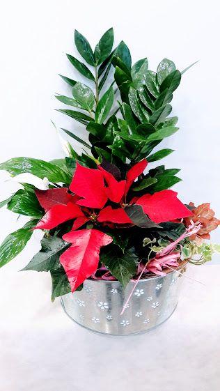 Στείλτε λουλούδια στους αγαπημένους σας εύκολα, γρήγορα και αξιόπιστα και χαρίστε τους ένα χαμόγελο και μία όμορφη στιγμή! Ανθοπωλείο Παπαδάκης από το 1989 Ζησιμοπουλου 91 Π.Φάληρο (πλησίον Μαιευτηρίου ΡΕΑ )  καλέστε μας τώρα στο 2109426971 για άμεση παράδοση  info@flowers4u.gr  www.flowers4u.gr Μέλος του μεγαλυτέρου δικτύου αποστολής ανθέων INTERFLORA -FLEUROP  μπουκέτα με άνθη για παράδοση εντός περιοχής Αθηνών από 30 ευρώ ! www.flowers4u.gr info@flowers4u.gr