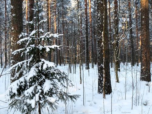 Goodbye a little forest, photo Taina Tervonen
