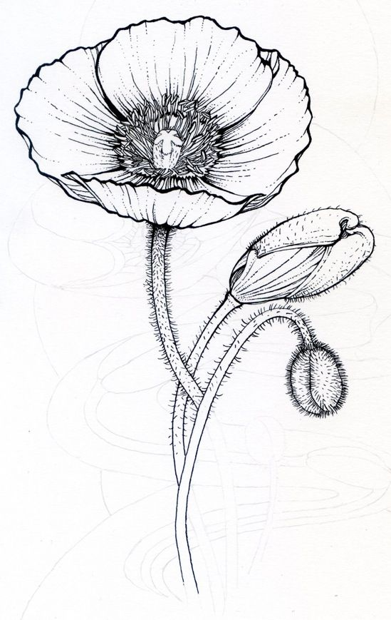 Line Drawing Coneflower : Best images about simple line drawings on pinterest