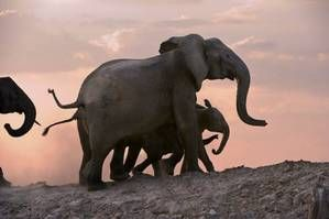We have such an obsession for Elephants! Book your tour to see these beautiful animals and more! http://africanoutposts.co.za/