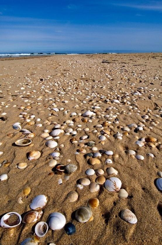 Lake Tyers Beach, Victoria, Australia