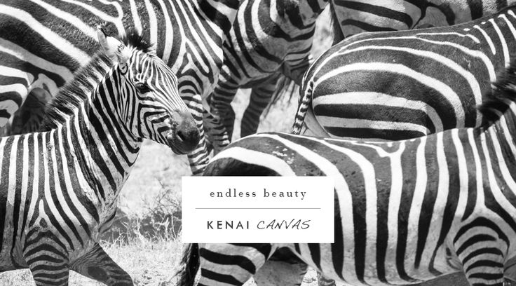 Decorate your home today! You can get an A1 print of any image for only R900. Contact us to find out more. Email → arno@kenaicanvas.co.za or call: 062 483 8925. #KenaiCanvas