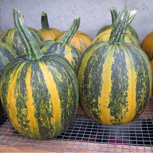 Pepitas: Grow Naked Pumpkin Seeds