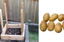 How to Grow 100 Pounds of Potatoes in 4 Square Feet | Apartment Therapy