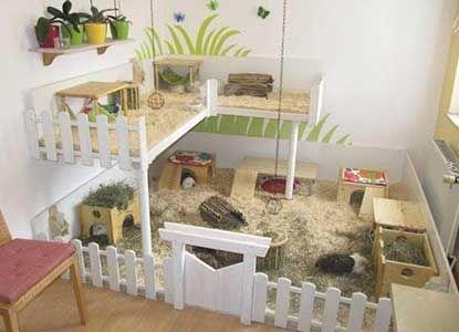 Homemade Guinea Pig Cages Home Depot