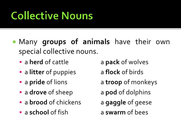 17 Best ideas about Collective Nouns on Pinterest | Group
