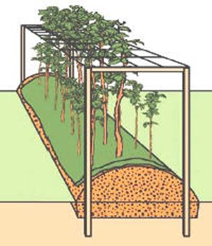 framozenplanten in pot houden