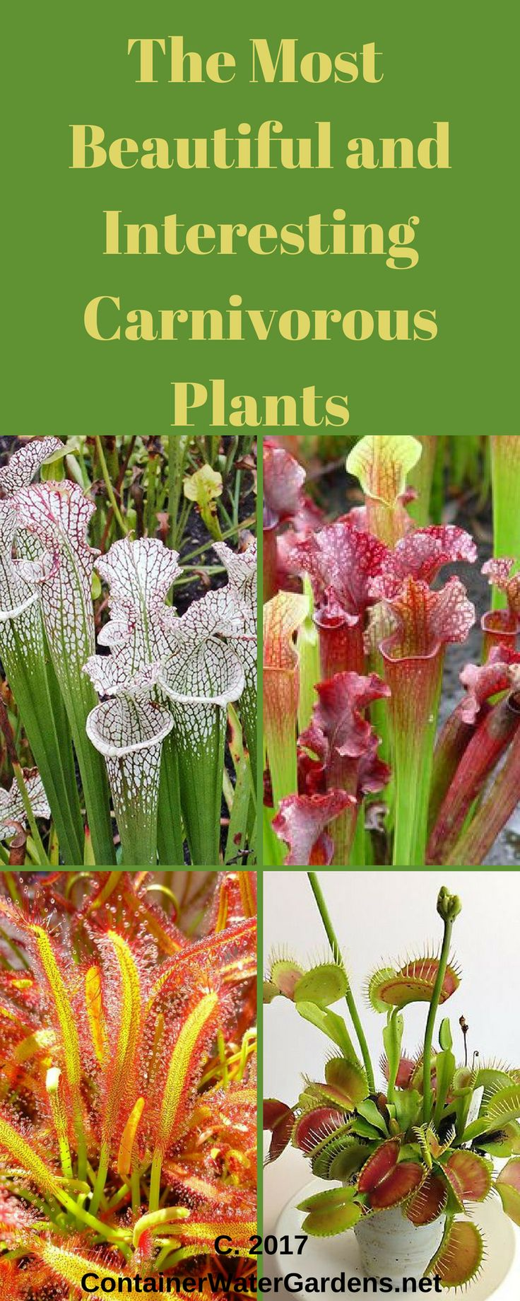 Top right and left: hardy pitcher plants (Sarracenia species), bottom left: Sundew plants (Drosera sp.), bottom right: Venus fly traps (Dionaea sp.). Read how you can create and care for an awesome carnivorous terrarium @ www.containerwatergardens.net/create-fascinating-carnivorous-terrarium/