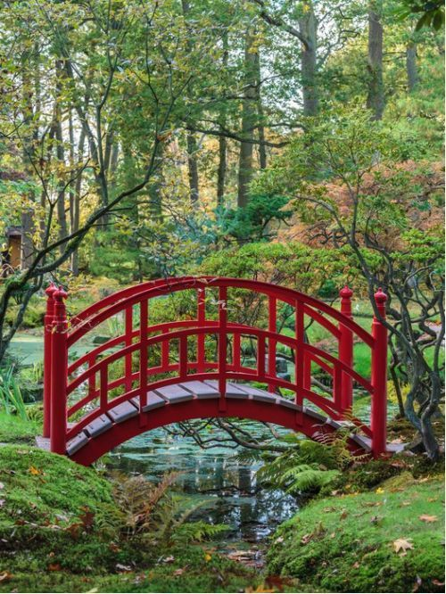 red traditional japanese bridge in a colorful autumn garden stock photo