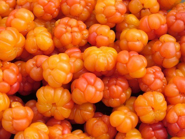 Cloudberries - native to Scandinavia and other arctic regions - popular in Norwegian and Swedish deserts.
