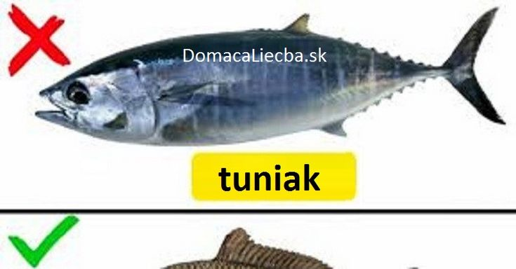 Ryby sú veľmi zdravé, ak pochádzajú z čistých riek a morí, no väčšina je dnes už silne kontaminovaná. Platí to hlavne o týchto druhoch.