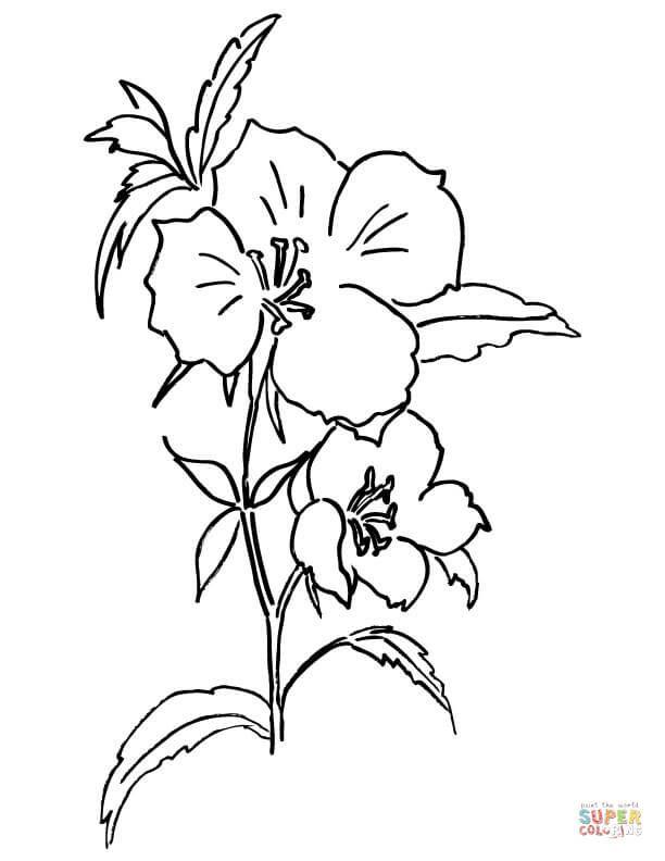 Godetia o Adiós a la primavera Dibujo para colorear. Categorías ...