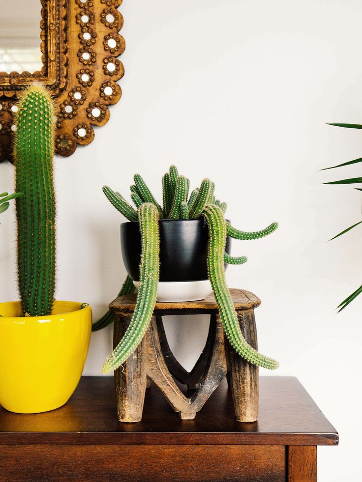 Bijzondere urban jungle cactus op houten krukje