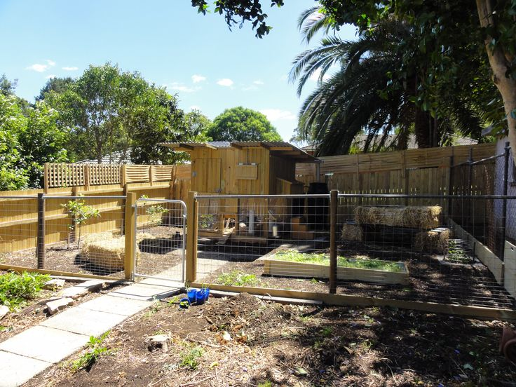 Chicken coop built in the rear of a rental property (with blessing of landlord). #yandeloracoops