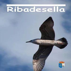 Visita Ribadesella os permitirá tener a mano la información de interés para hacer de vuestra visita a Ribadesella una experiencia la mar de agradable.