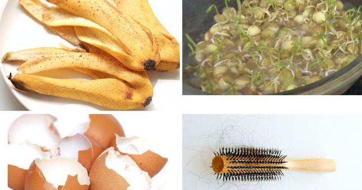 4 abonos caseros fáciles y económicos para mantener tus plantas hermosas