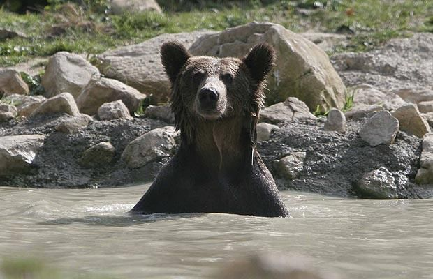 bear-sanctuaryg_1112935i.jpg (620×400)