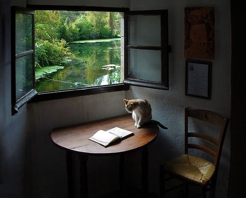 Beautiful. I might even get a book out in a setting like this