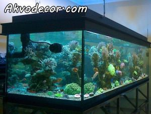jual paket aquarium air laut