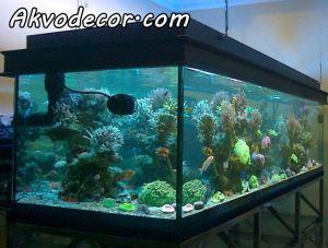 jual paket aquarium air laut