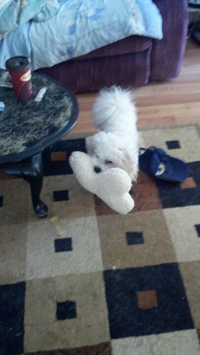 My pup and his big stuffed bone.lol