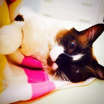 Théo - Théo é um gatinho muito calmo e dorminhoco que adora passear pelo condomínio!
