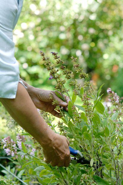 Op tuinieren.nl vind je een stappenplan om vaste planten en halfheesters te vermeerderen door stekken. In dit artikel vind je een uitleg over stekken.