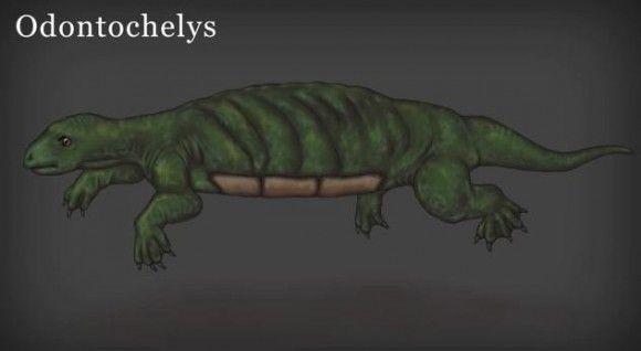 【カメの甲羅の進化】なんて奥が深いんだ! 今度はカメの祖先の姿がわかっちゃう動画