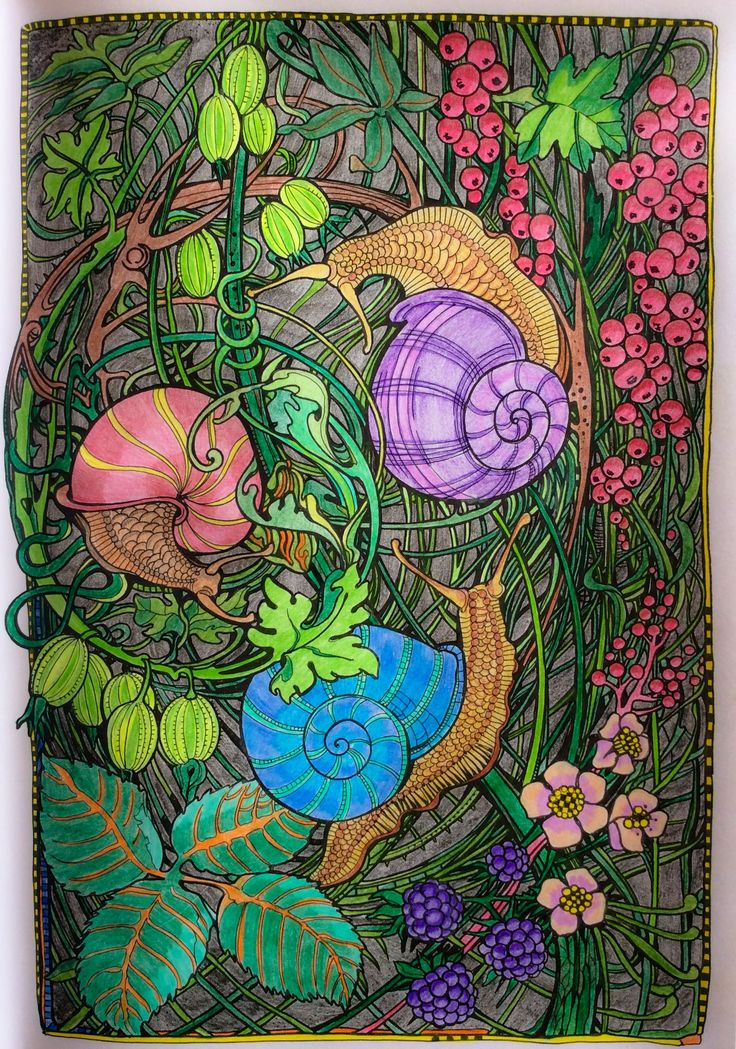 Coloring Books Adult Colouring Colored Pencils Reptiles Bugs Drawing Do Tips