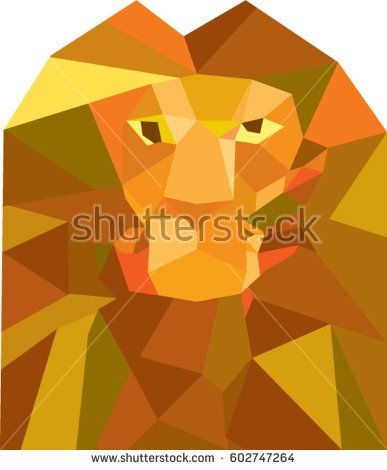 Low polygon style illustration of a lion big cat head viewed from front set on isolated white background.  #lion #lowpolygon #illustration