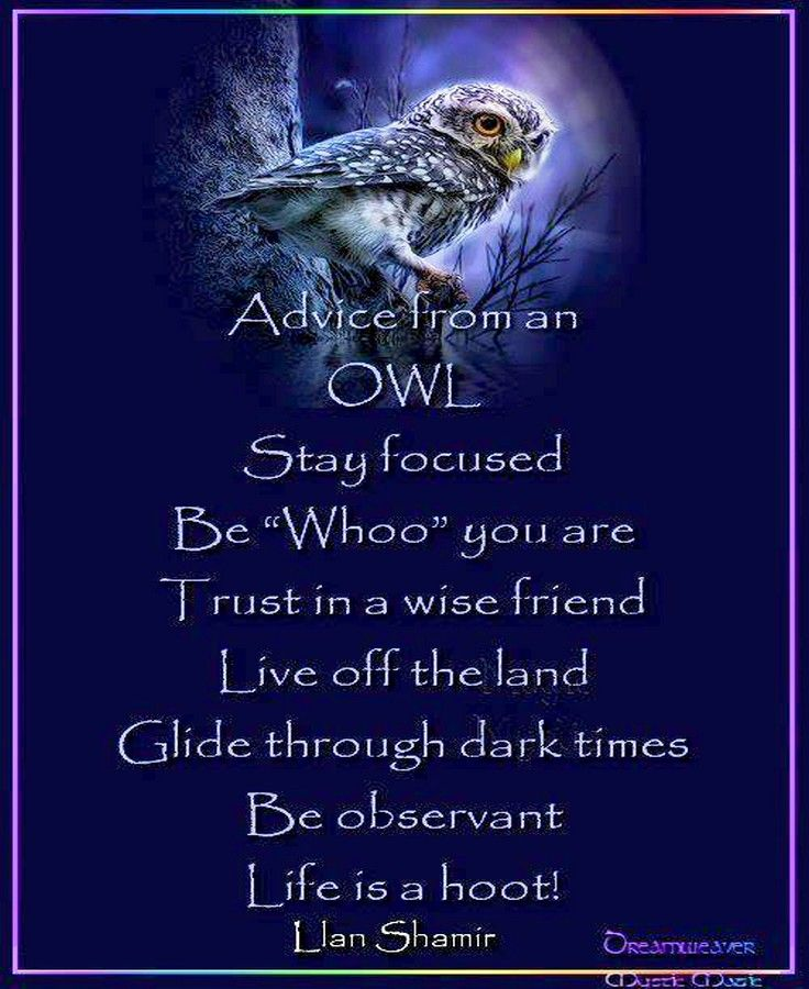 They are wise creatures, those owls. … | Advice quotes ...
